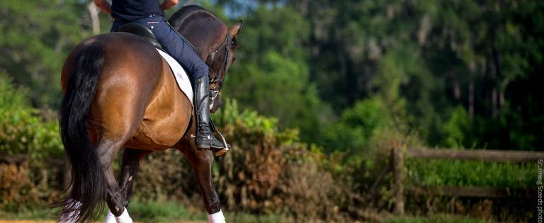 Dressage horse practicing in an outdoor arena