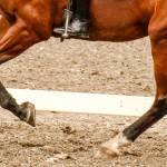 Close-up photo of a dressage's horses legs during a canter stride