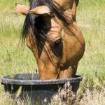 Horse eating from ground feeder