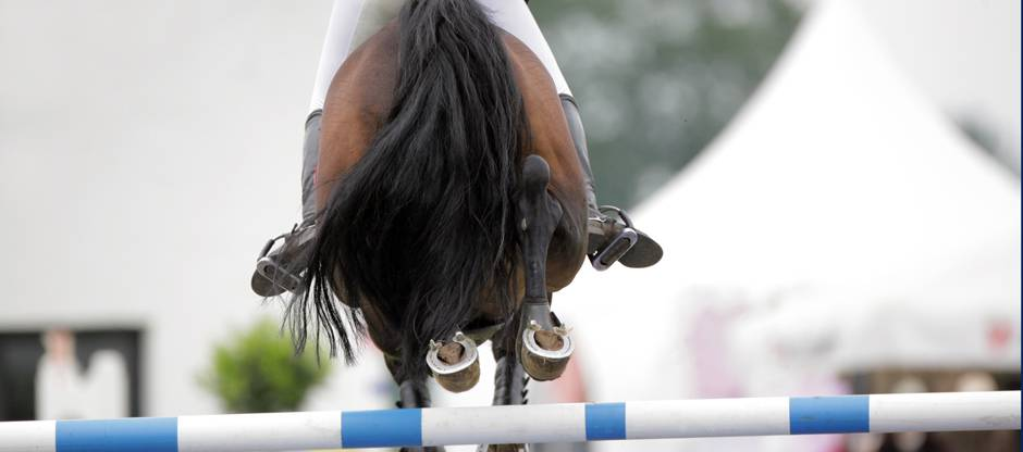 Show jumper clearing fence
