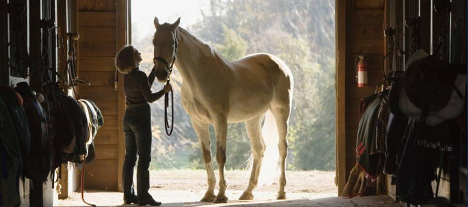 Woman in barn aisle with senior horse