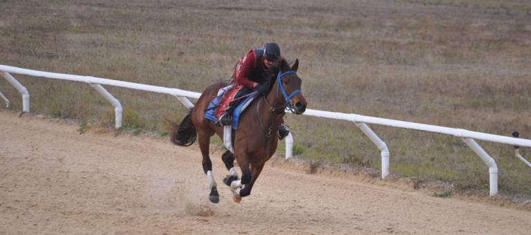 Racehorse exercising on track