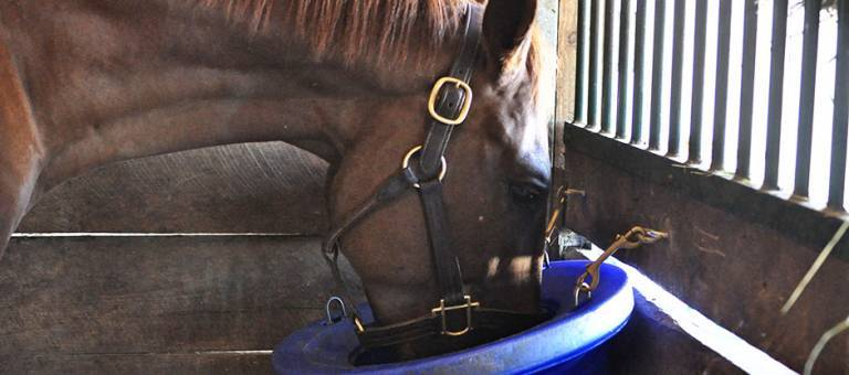 Horse eating in stall