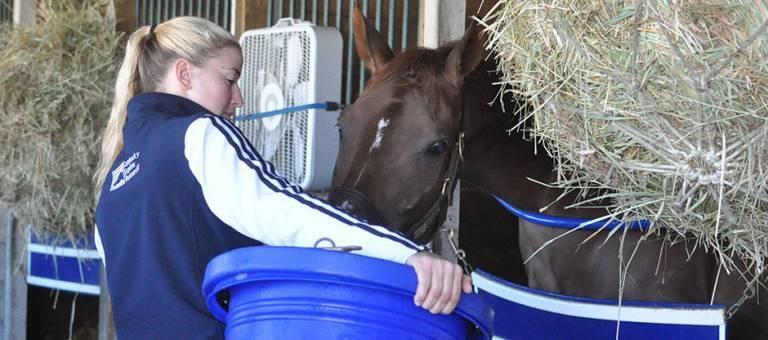 Woman feeding a horse in a stall