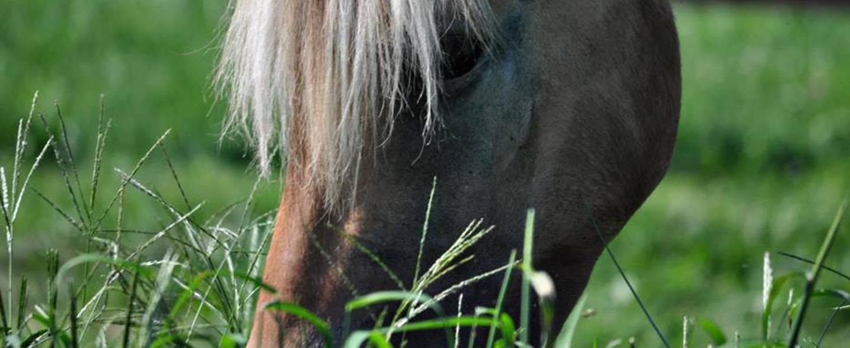Close-up of horse gazing