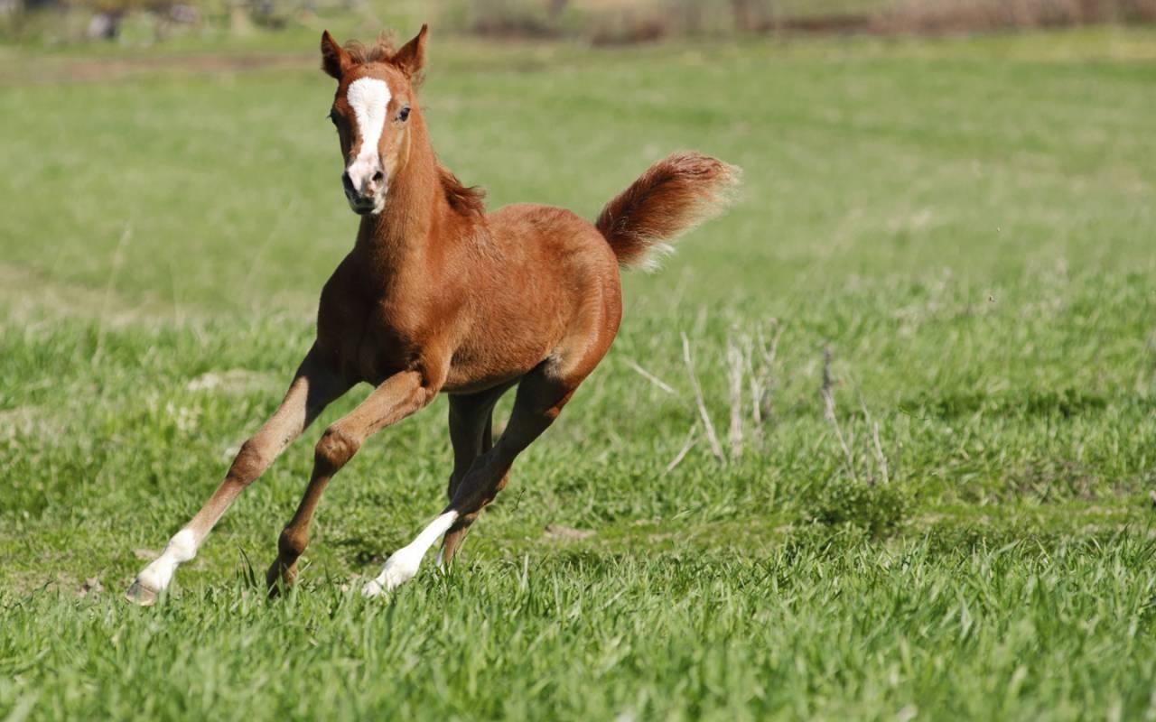 Foal running in field