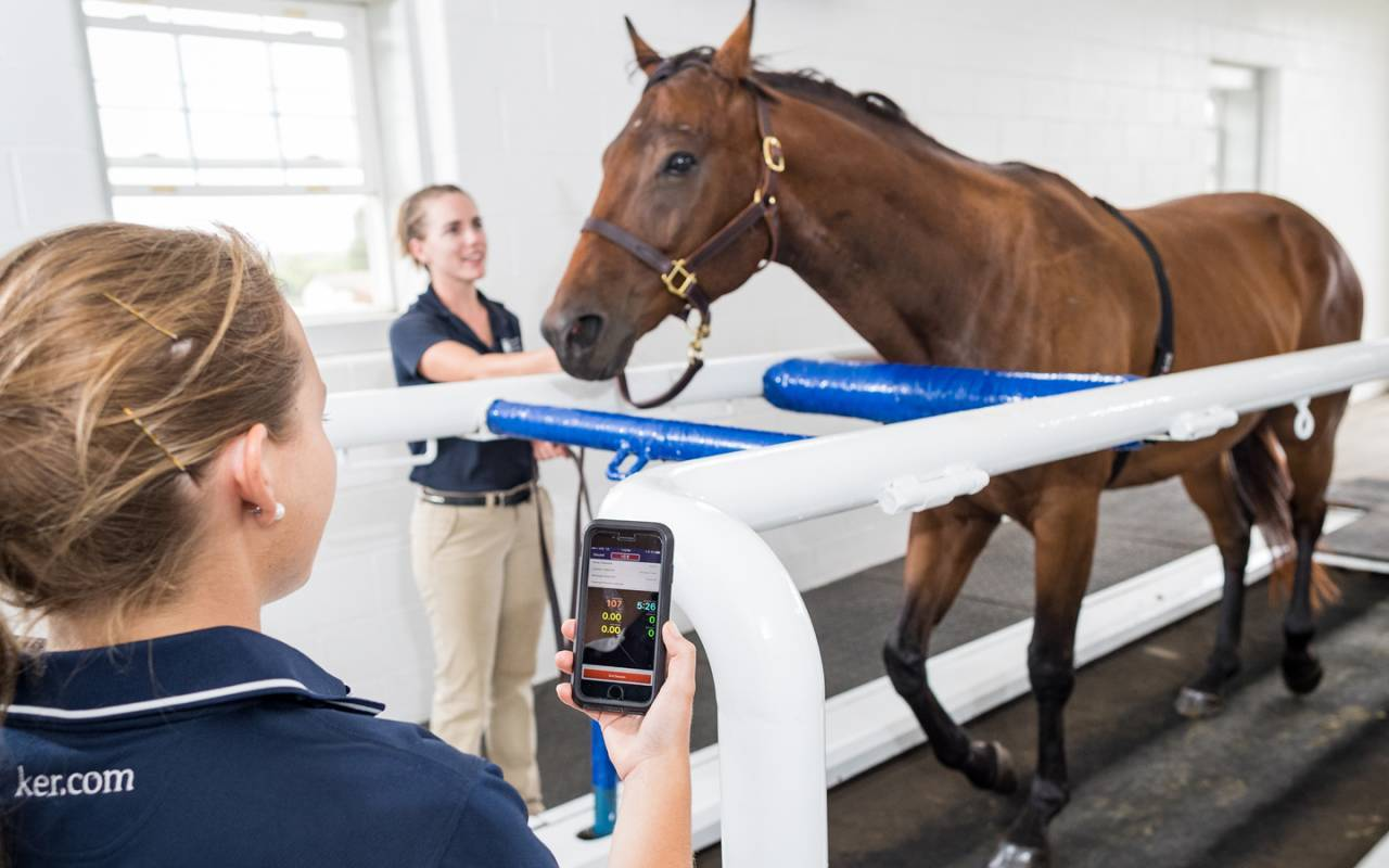 Using KER ClockIt with horse on treadmill